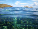 crystal clear water, shark bay. 2008-08-28, Pentax W60. keywords: shark island, coral view resort