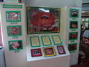 wrong season, unfortunately: rafflesia information booth (rafflesia sp. is a parasite that grows the world's biggest single flower)