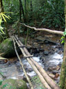 a bridge in khao sok nationalpark
