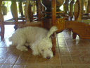 one of the unhurried dogs at nung house.. 2008-09-01, Sony K750i.