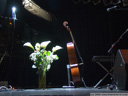 same picture, hdr attempt - stage scene: calla lillies and a cello. 2009-03-30, .