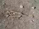 ancient bones: hip and legs. 2009-04-07, Sony F828. keywords: archaeological excavation, archäologische ausgrabungen