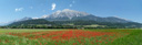 panorama: corn field with poppy (papaver rhoeas)