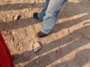desert-walkers. 2007-09-03, Sony F828. keywords: legs