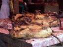 this was probably the most disgusting and unsettling thing we saw in indonesia: dogs for sale at tomohon market