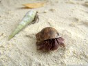 hermit crabs are cool!