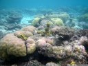 "wonderful reefscape at ""number 5"" snorkelling spot, malenge"