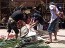 the skinning starts. water buffalo sacrifice (torajan funeral ceremony)