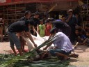 water buffalo skinning (torajan funeral ceremony)