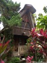 tongkonan style cottages at duta 88 - a quiet little oasis in the middle of rantepao (tana toraja, sulawesi)