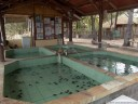 the gili meno sea turtle conservation project tries to protect the eggs and young turtles from predators.