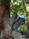mr. monkey digs sprite