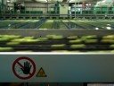 automatic apple sorting machinery. no touchey!