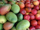 tropical fruit: green and red mangos (mangifera indica)
