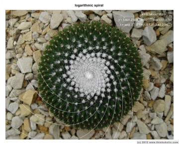 fibonacci spiral – logarithmic spiral curve fitting to cactus areoles