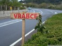 vrabce - let us put up twigs!