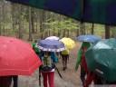 umbrellas. 2012-04-22 03:41:16, DSC-F828.