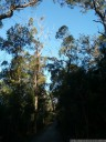 eucalyptus forest, bidjigal reserve