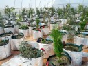 potted plants for experiments