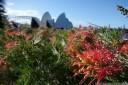 grevillea sp. (proteaceae) and sydney landmarks. 2012-10-13 06:43:43, DSC-RX100.