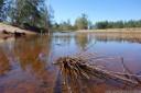 yarramundi reserve. 2012-10-20 05:47:54, DSC-RX100.