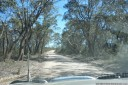 driving through eucalypt forests