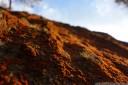lichen landscape. 2012-11-04 07:36:21, DSC-RX100.