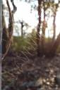 zig-zag spiderweb. 2012-11-04 07:40:46, DSC-RX100.