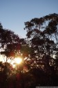 eucalyptus sunset, mt piddington, blue mountains