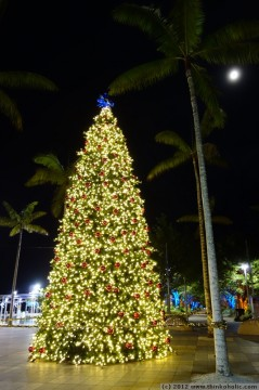 cairns christmas tree in the midst of tropical palms