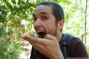 do stick insects taste like sticks? (photo: danielle creek). 2012-12-20 02:36:34, DSC-RX100.