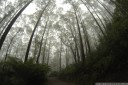 cool temperate rainforest, mount oberon, wilson's promontory national park