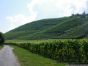 swiss vineyard, near cortaillod