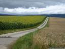 biking between cornfields and sun flowers, near lussery-villars