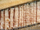 lärche (larix decidua) - holz-bohrkern zeigt einen bereich mit dürreperioden (um 1945; dünne jahrringe, die teilweise nur aus wenigen zellreihen bestehen) || foto details: 2008-11-17 12:25:22, innsbruck, austria, PENTAX Optio W60.