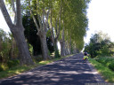a boulevard of lopsided plane trees, saint-génis de fontaines