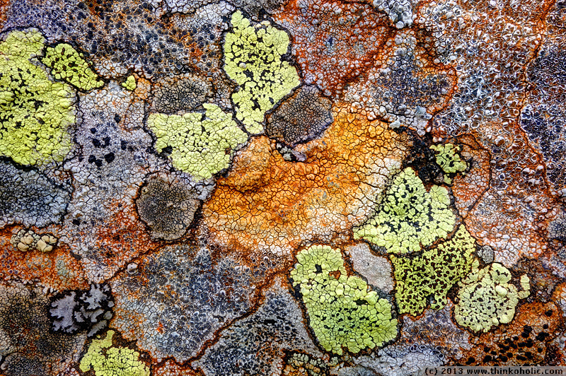 lichen sramble - crustose lichens on a rock. species include rhizocarpon geographicum (yellow with black fruiting bodies), umbilicaria cylindrica (bottom left, grey with black fringe), lecidea lithophila (bottom right), and presumably lecanora spp., fuscidea spp.and lecidella spp.