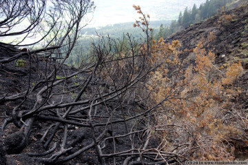 absam forest fire: charred landscape at latschenegg