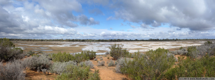 panorama: kinchega national park - the desert, after rainfall