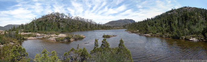 panorama: pencil pine (athrotaxis cupressoides) at the labyrinth, pine valley, tasmania