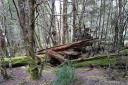 myrtle beech (nothofagus cunninghamii) forest, overland track, tasmania