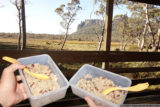 rice and bean dinner at pelion hut, in plastic containers, with sporks.