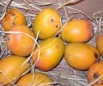 Mangos der Sorte Alphonso (Foto: Gaurang Patkar, PD)