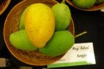 Mangos der Sorte Angie (Foto: Quam256, cc-by-sa 3.0)