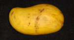 Mangos der Sorte Ataulfo (Foto: Asit K Ghosh, cc-by-sa 3.0)