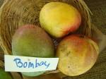 Mango der Sorte Bombay (Foto: Asit K. Ghosh, cc-by-sa 3.0)