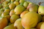 Mangos der Sorte Bowen (Foto: Markus Nolf / Vom Essen Besessen)