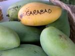 Mangos der Sorte Carabao (Foto: Asit K. Ghosh, cc-by-sa 3.0)