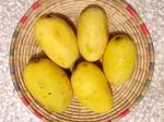 Mangos der Sorte Chaunsa (auch: Chausa, Chowsa; Foto: Jahanzaib Zai, cc-by-sa 3.0)