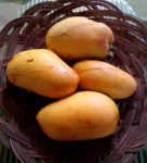 Mangos der Sorte Chok Anan (Foto: Bagoto, cc-by-sa 4.0)
